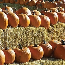 pumpkins haybales