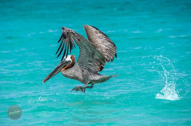 Galapagos Newsletter pic #2.jpg
