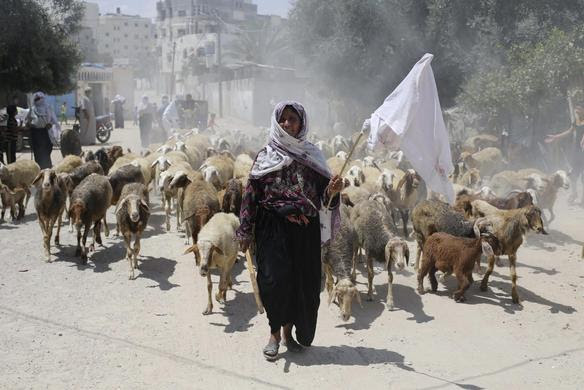 A Palestinian shepherd holding a white cloth flees her house with her herd following an Israeli ground offensive in Rafah in the southern Gaza Strip July 19, 2014. REUTERS-Ibraheem Abu Mustafa