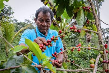 Expo Café 2021 vuelve con 120 marcas procedentes de pequeños agricultores nacionales