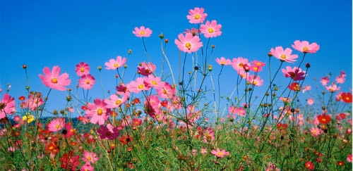 pinkflwrs96ffd9 POP INTO SPRING WITH THESE SPECIAL DEALS  | Austin Dermatology