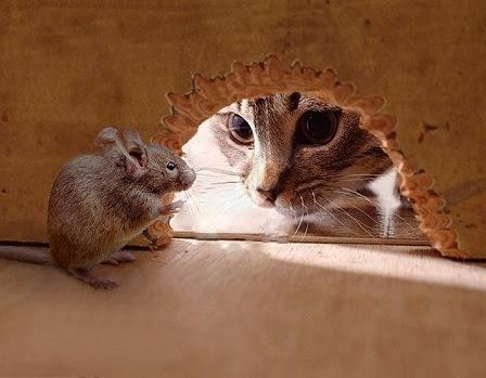 chat-et-souris