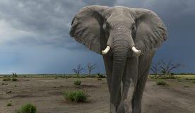 An elephant in Chobe National Park, Botswana..