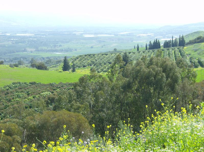 Galilee greenery
