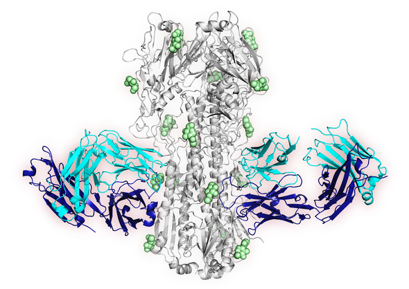 structure of newly-identified antibody