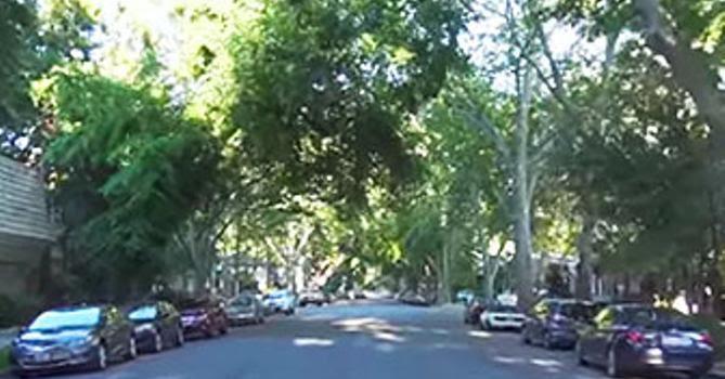 Street-Trees-SM.jpg