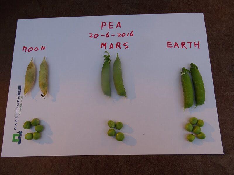"""Moon,"" ""Mars,"" and plain old Earth peas."