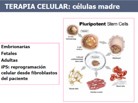 Terapia celualar - el uso de células madre embrionarias o las células adultas reprogramadas - céluas iPS, pues las primeras  tienen objetivos problemas éticos
