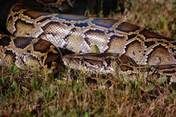 Python Pick up