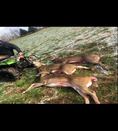 Three deceased deer behind the back of an ATV