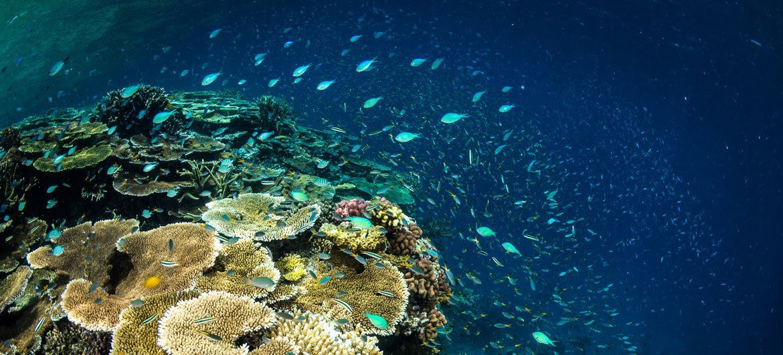 Grande barrière de corail, Australie.