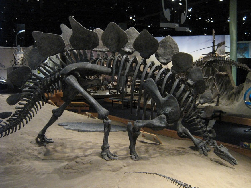 Image result for fossil dinosaurs
