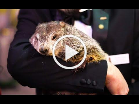 Craft Spirits TV: It's Groundhog Day with Wigle Whiskey!