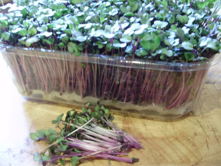 Pink kale microgreens for winter salads.