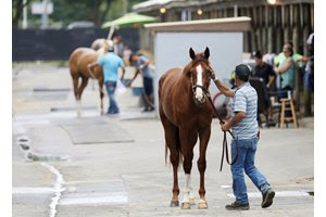 Juveniles are shown to prospective buyers at the Fasig-Tipton Midlantic Sale