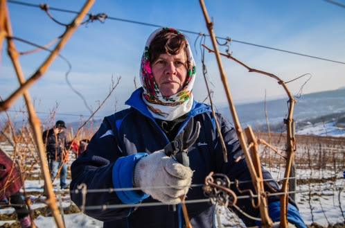 oman standing in vineyard holding pruning shears (Colby Gottert for USAID)