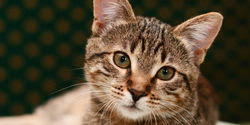 End horrific experiments on cats at SUNY College of Optometry
