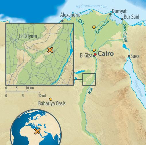 Posición del yacimiento de Abusir el-Meleq. En naranja, origen del material genético de las poblaciones modernas.