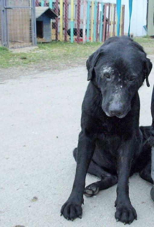 Pas iz romskog naselja [ 104.27 Kb ]