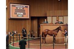 The Quality Road colt consigned as Hip 1197 at the Keeneland September Sale