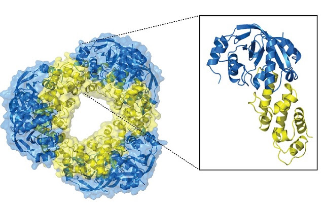 190214_MolecularCell_Wilmanns_toxin-antitoxin-structure.jpg