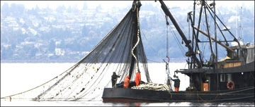 Fisheries Innovation Fund