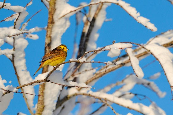 Help wildlife this winter – be a lazy gardener