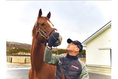 California Chrome after arriving at Arrow Stud in January