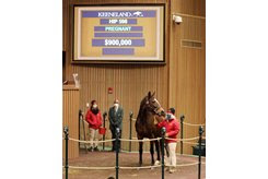 Deceptive Vision sells for $900,000 in the ring at the Keeneland January Sale