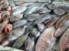 peces-140x105.jpg