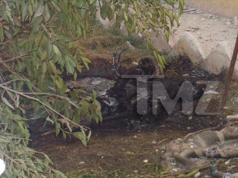 Imágenes publicadas por TMZ. Las fotos son horriblemente gráficas: recomendamos discreción.