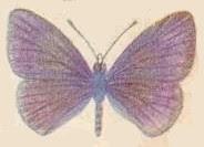 mariposa009