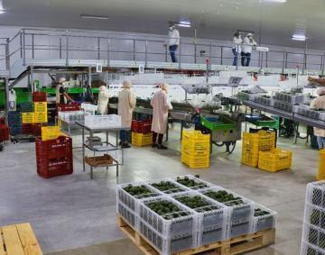 Agroexportaciones lambayecanas sumaron US$ 723 millones en la primera mitad del 2021, mostrando un aumento de 35%