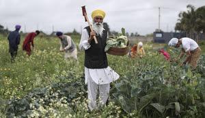 Sikhs NZ