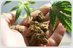Marijuana causes alters genetic makeup of sperm