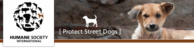 Protect  Street Dogs