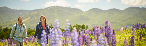 A man and woman walking through a field of lupine flowers