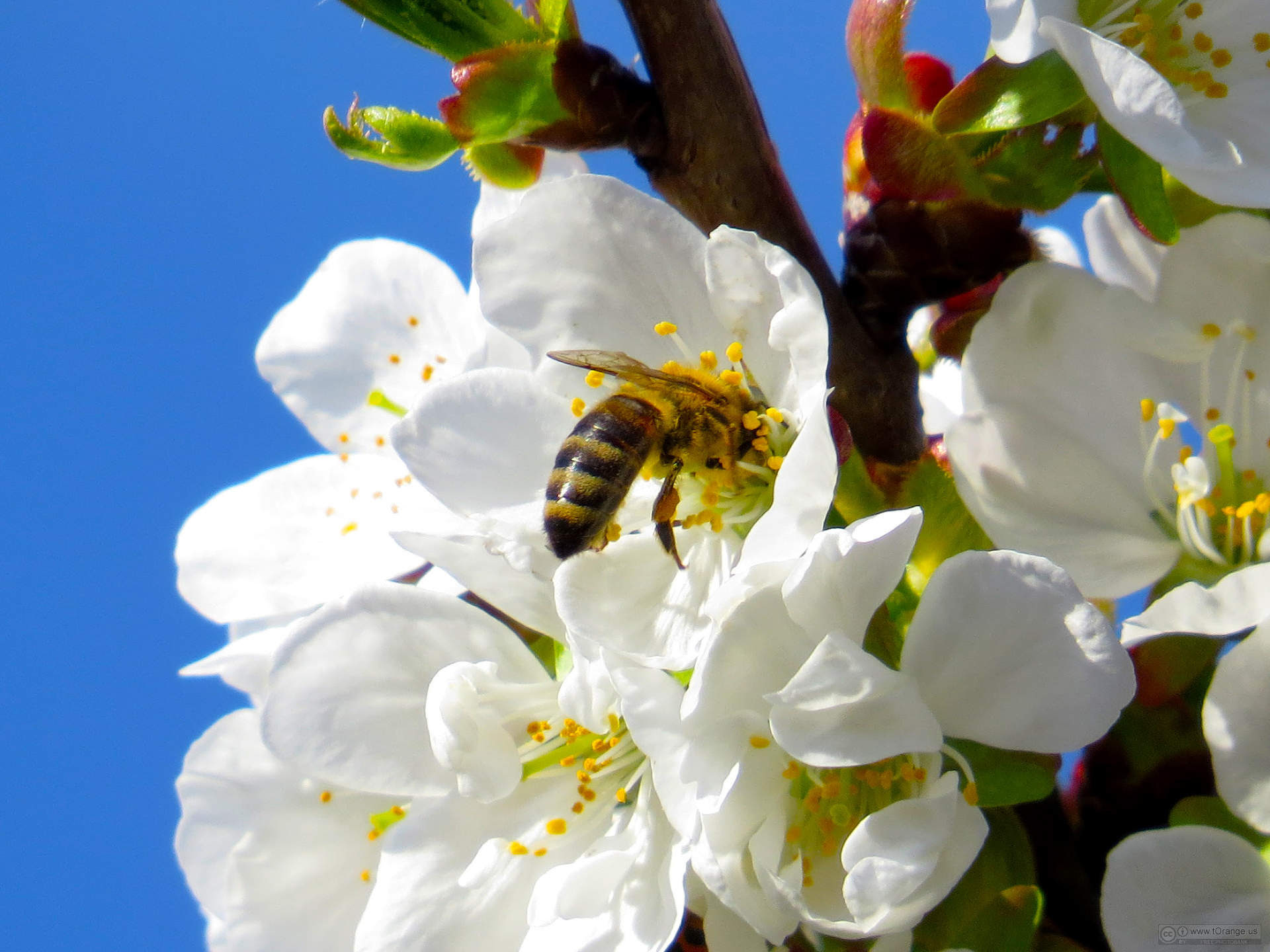 Bee-in-flower-1384347242_89.jpg