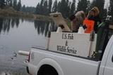 DFP preparing for fish survey