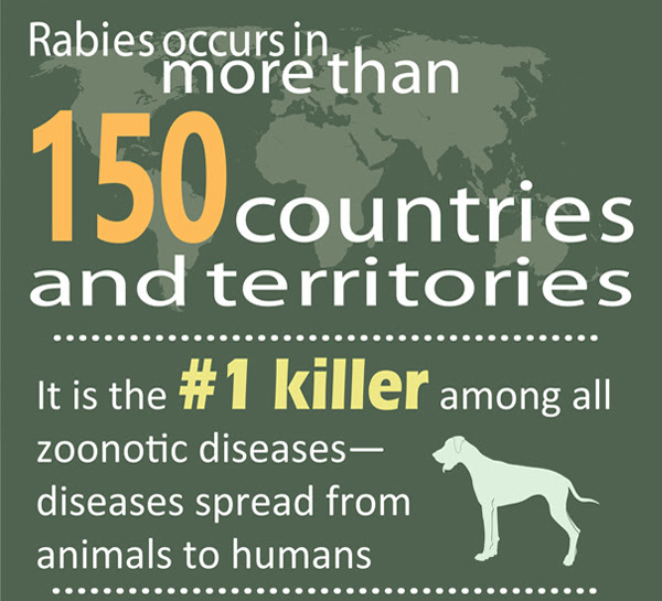 Infographic: Rabies