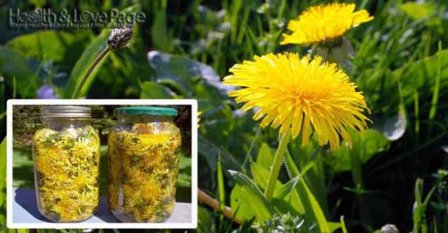 How to Make Dandelion Tea to Cure Cancer and Treat Other Ailments (Video)