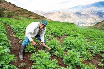 Agrobanco logró meta de colocaciones por S/ 440 millones del Fondo Agroperú