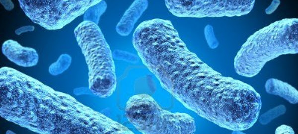 White House MDR TB