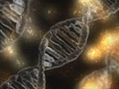 Gene therapy tested in colorblind monkey could help humans
