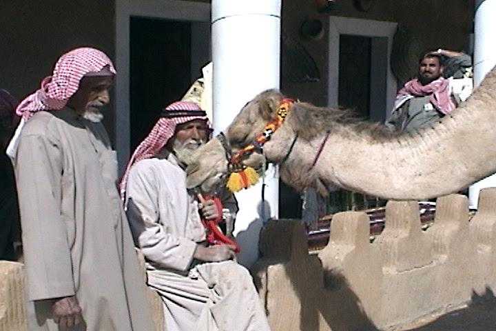 Camel Hault