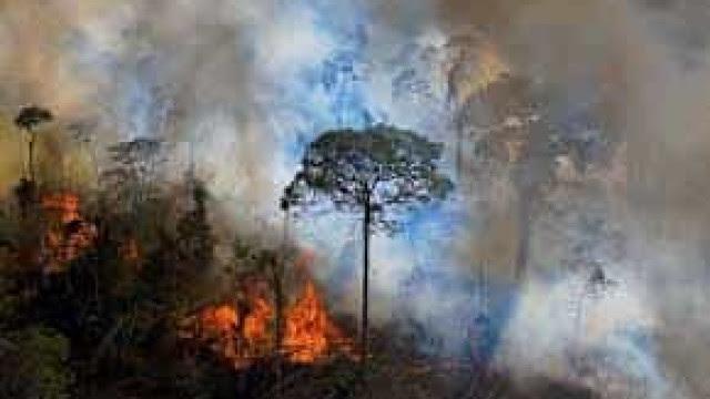 Chefe da área de combate a incêndio do Ibama pede demissão
