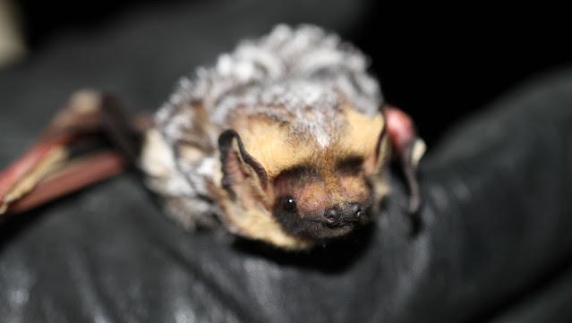 Bat Week takes flight in Alberta