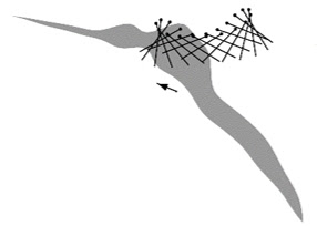 図1 蚊の翅断面の運動