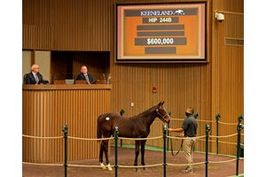 The American Pharoah colt consigned as Hip 244B was the co-highest-priced weanling of the Keeneland November Sale