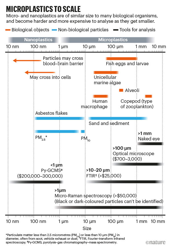 MICROPLASTICS TO SCALE: infographic comparing sizes of microplastics to biological objects and the technology needed to study th